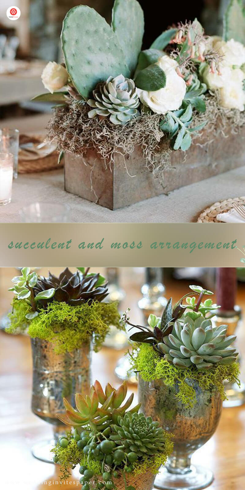 3 succulent and moss arrangement.jpg
